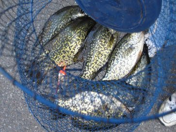 gull_lake_crappies