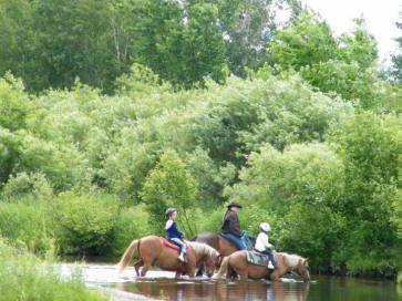 3-horses-pine-river
