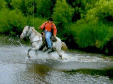 horse-pine-river