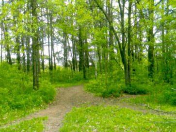 horseback-trails-pr